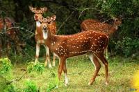 Kumana National Park Hambantota