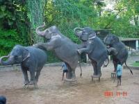 Colombo Dehiwala zoo