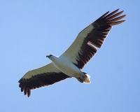 Bundala National Park - Hambantota