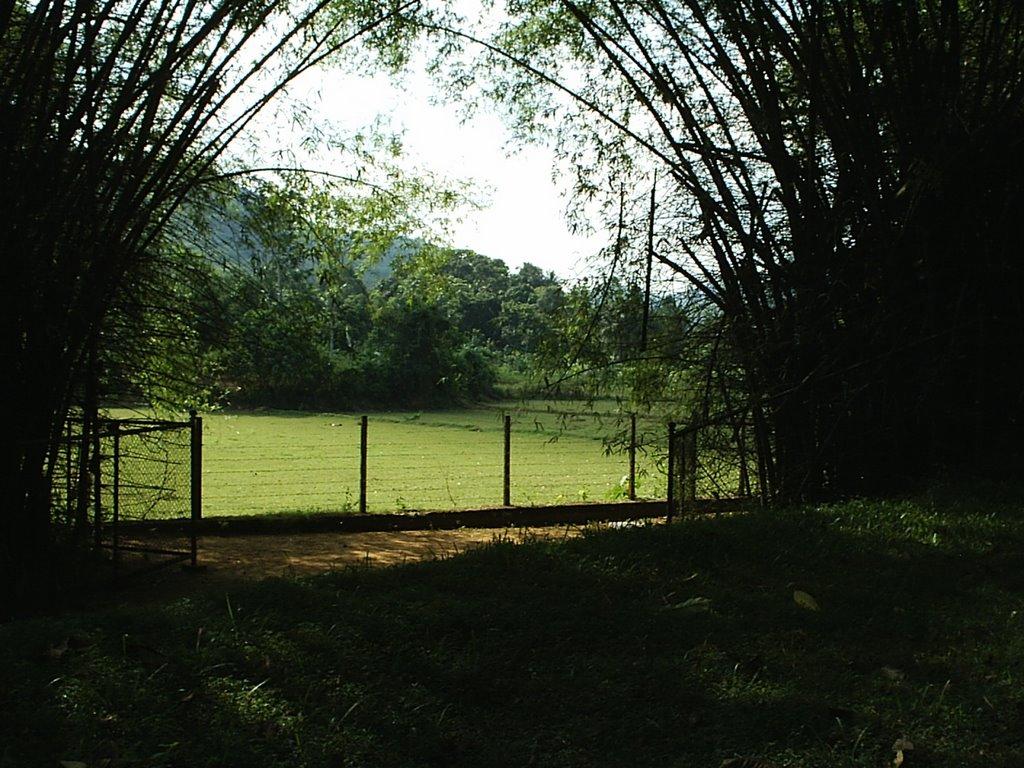 Pethangoda Bamboo Grove