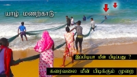Jaffna pointpedro manalkaadu beach and fishing method in srilanka