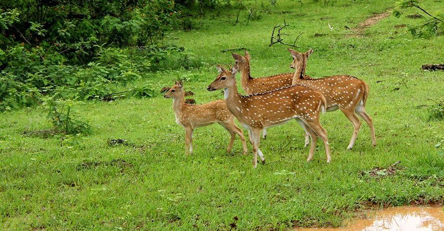 Wildlife in Srilanka